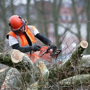 One of our professional tree arborist cutting trees into pieces
